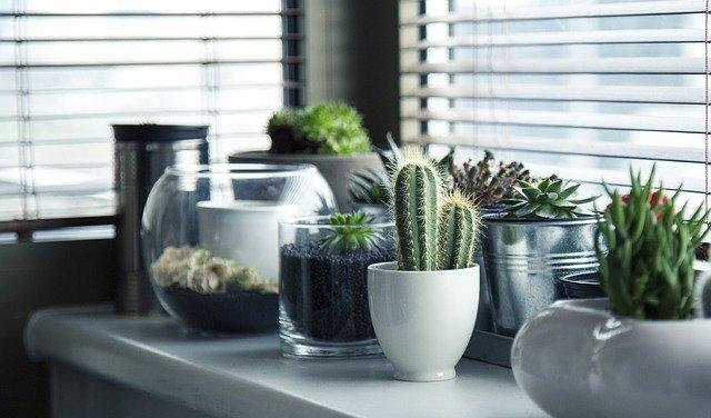 Comment savoir si mon cactus a besoin d'eau ?