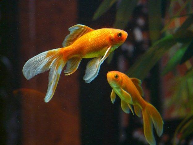 Où acheter une table aquarium ?